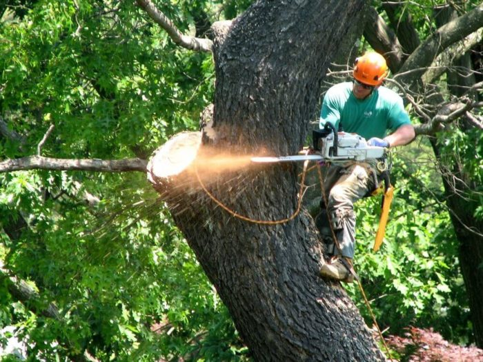 24/7 Tree Trimming Removal - Okeechobee's Best Tree Trimming and Tree Removal Services