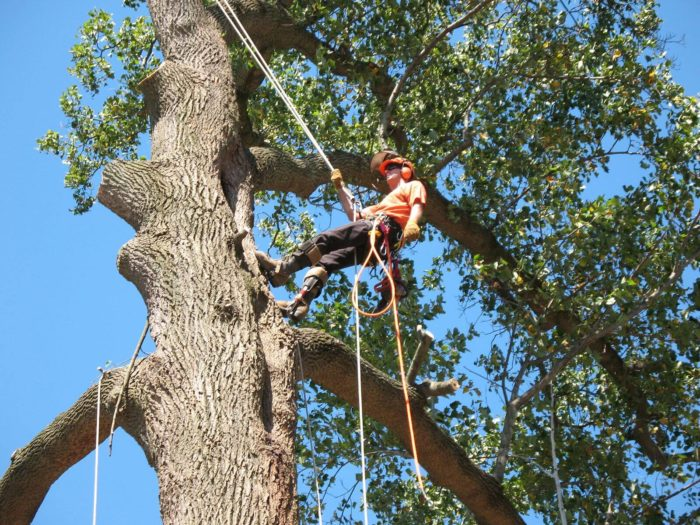 Contact Us-Okeechobee's Best Tree Trimming and Tree Removal Services