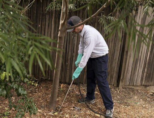Deep Root Injection-Okeechobee's Best Tree Trimming and Tree Removal Services
