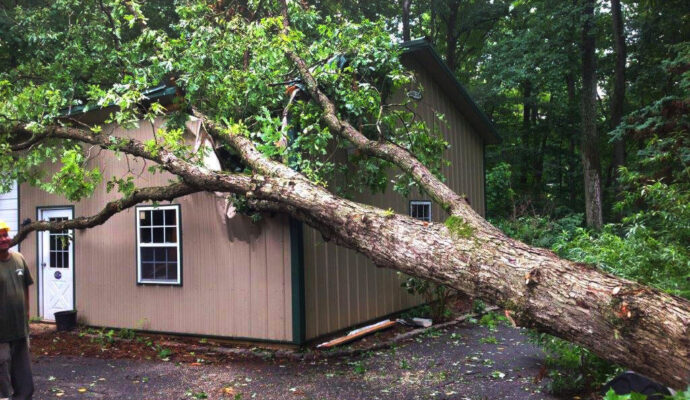 Emergency Tree Trimming Removal-Okeechobee's Best Tree Trimming and Tree Removal Services