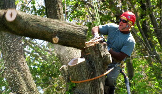 HOME PAGE-Okeechobee's Best Tree Trimming and Tree Removal Services