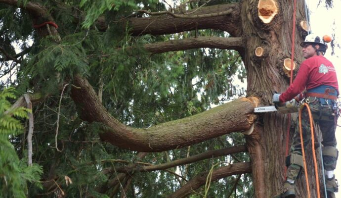 Residential Tree Trimming Services-Okeechobee's Best Tree Trimming and Tree Removal Services