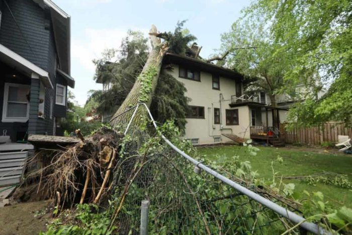 Storm Damage - Okeechobee's Best Tree Trimming and Tree Removal Services