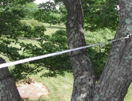 Tree Bracing and Cabling- Okeechobee's Best Tree Trimming and Tree Removal Services