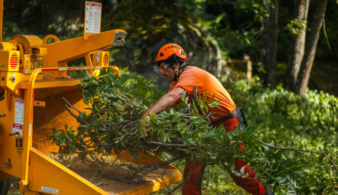 Tree Doctor-Okeechobee Best Tree Trimming Removal Services