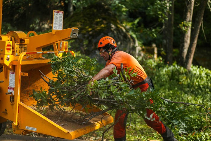 Tree Doctor-Okeechobee's Best Tree Trimming and Tree Removal Services