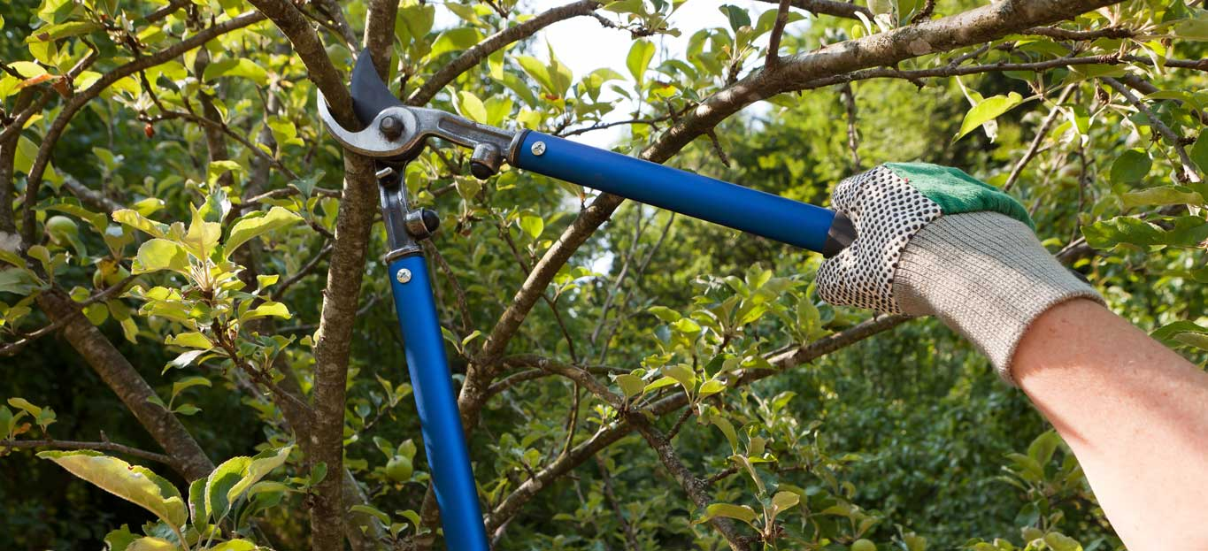 Tree Pruning-Okeechobee's Best Tree Trimming and Tree Removal Services