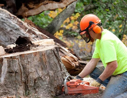 Tree Trimming Removal-Okeechobee's Best Tree Trimming and Tree Removal Services