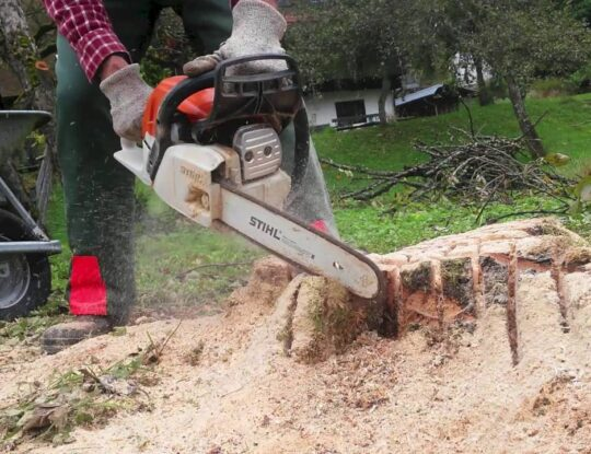 Tree Stump Removal-Okeechobee's Best Tree Trimming and Tree Removal Services