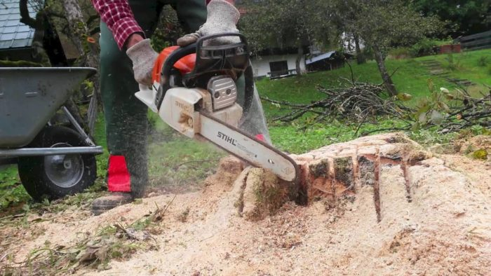 Tree Stump Removal - Okeechobee's Best Tree Trimming and Tree Removal Services