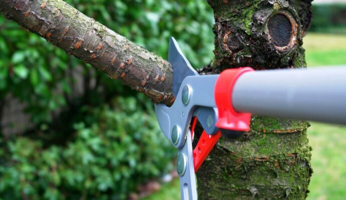 Tree Trimming Services-Okeechobee's Best Tree Trimming and Tree Removal Services